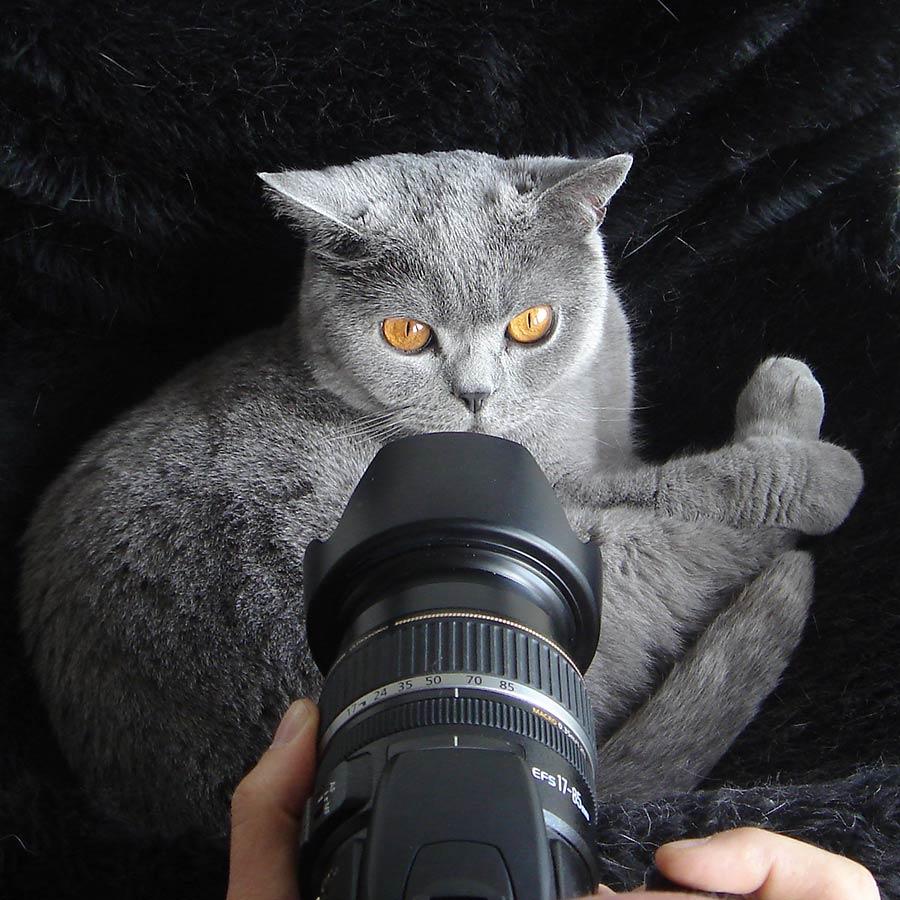 huisdier poes kat fotograferen foto tip fotocursus Hoofddorp