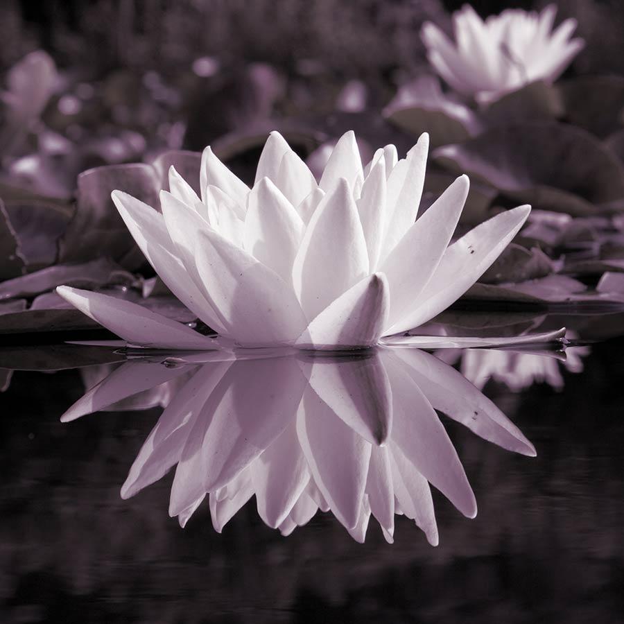 Fotografie tip: reflectie in de foto