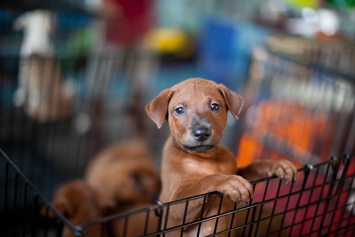 huisdier hond fotograferen foto tip fotocursus Hoofddorp