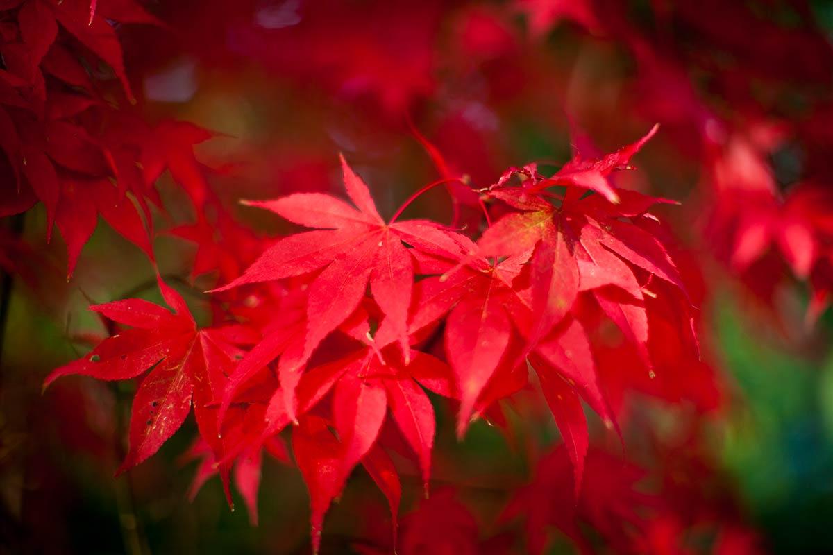 foto tip kleur contrast kleuren fotografie fotocursus Hoofddorp