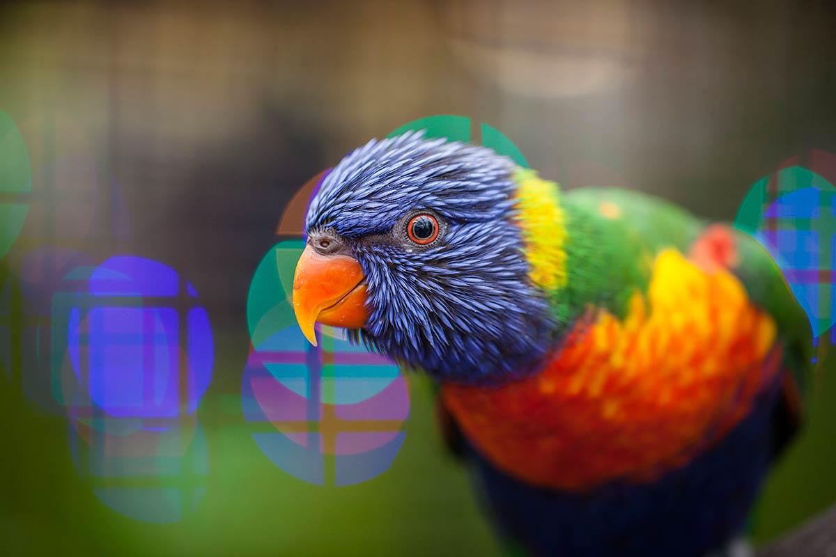 Let op kleur in de foto - Fotocursus Hoofddorp