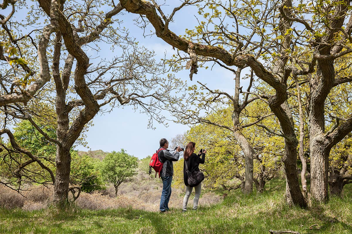 workshop fotografie fotocursus Amsterdamse Waterleidingduinen