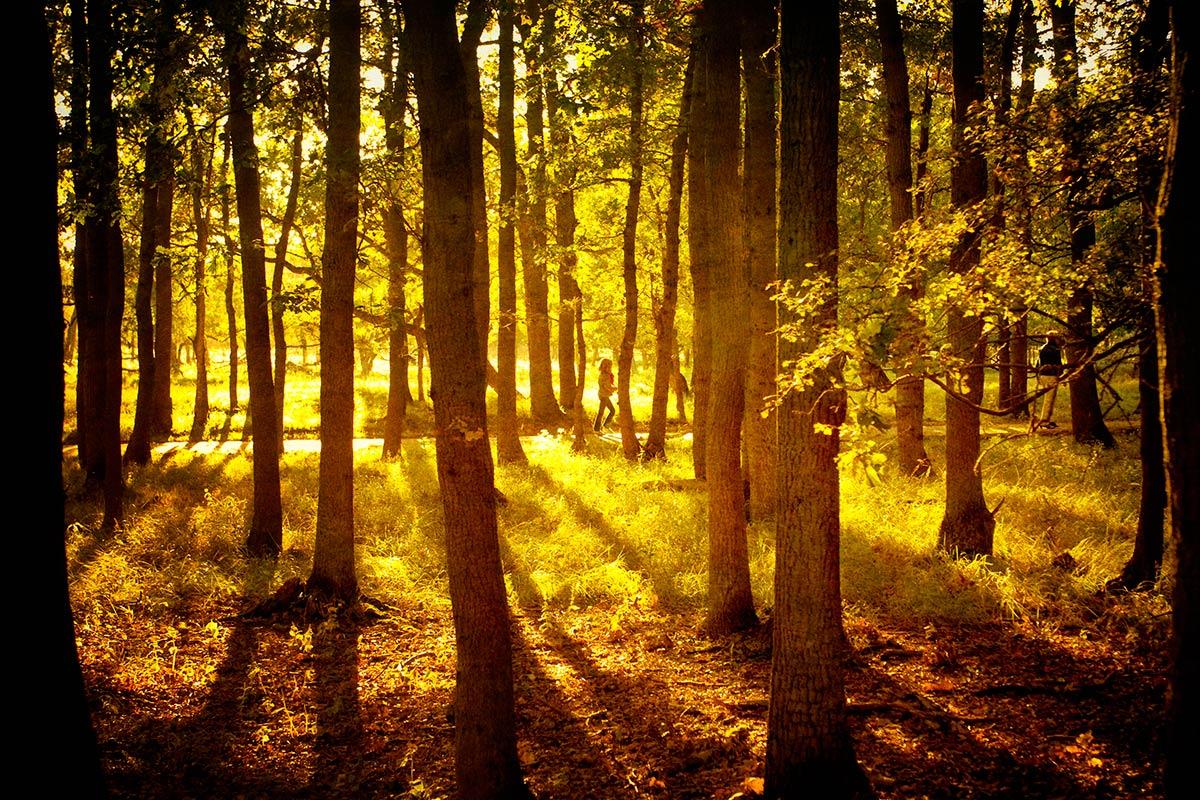 fototip fotografie zon tegenlicht zonlicht fotograferen workshop Haarlem Amsterdam
