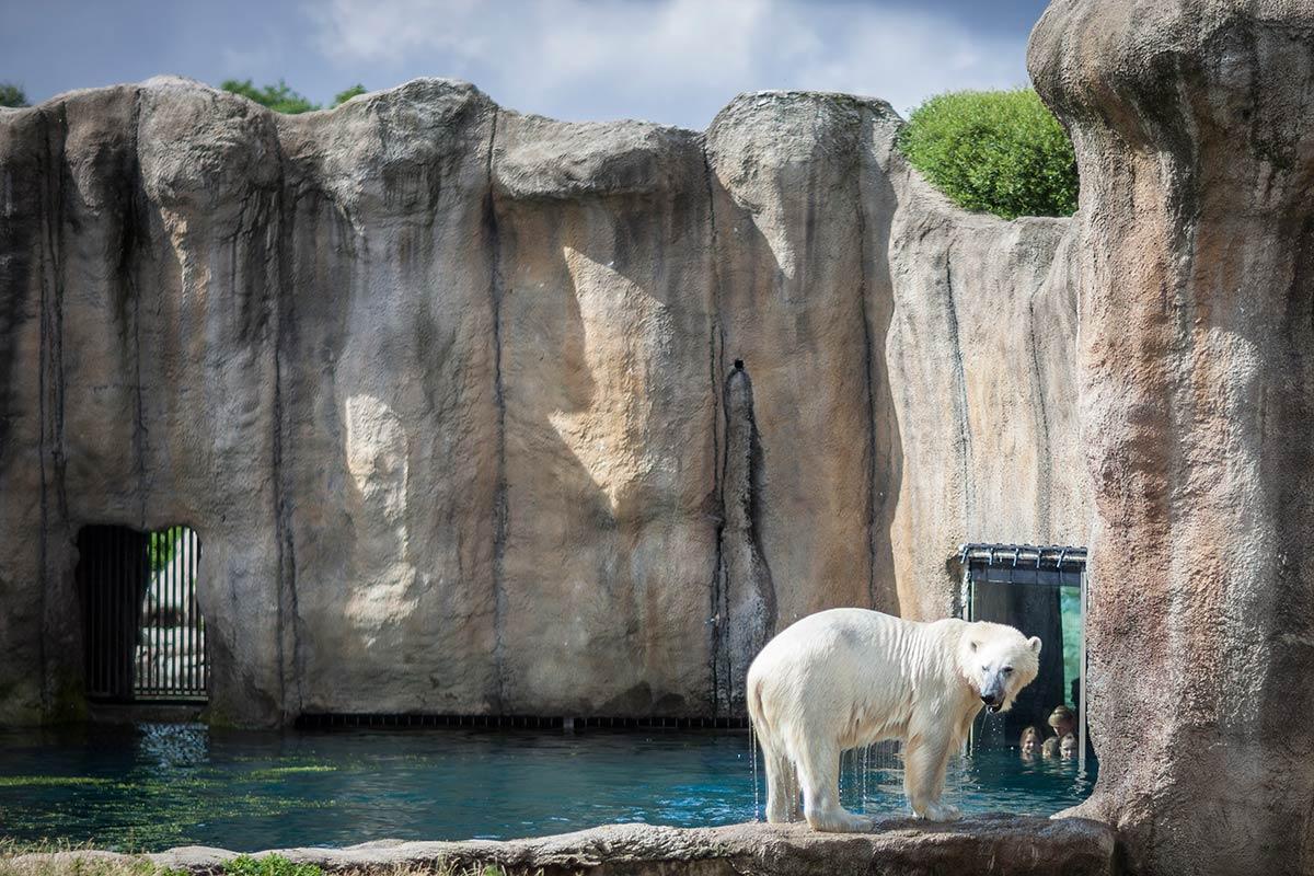 fotografie tips workshop fotograferen Rotterdam Blijdorp dierentuin
