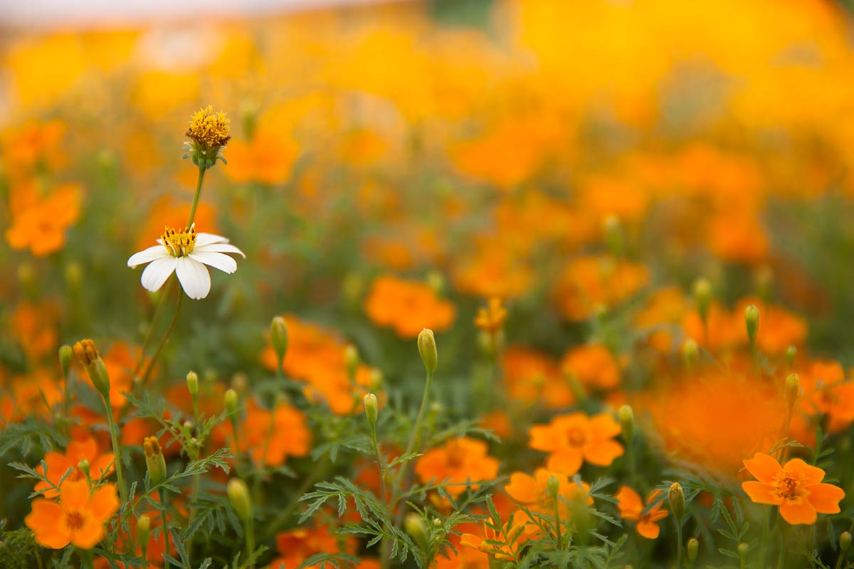 Tips voor bloemenfotografie