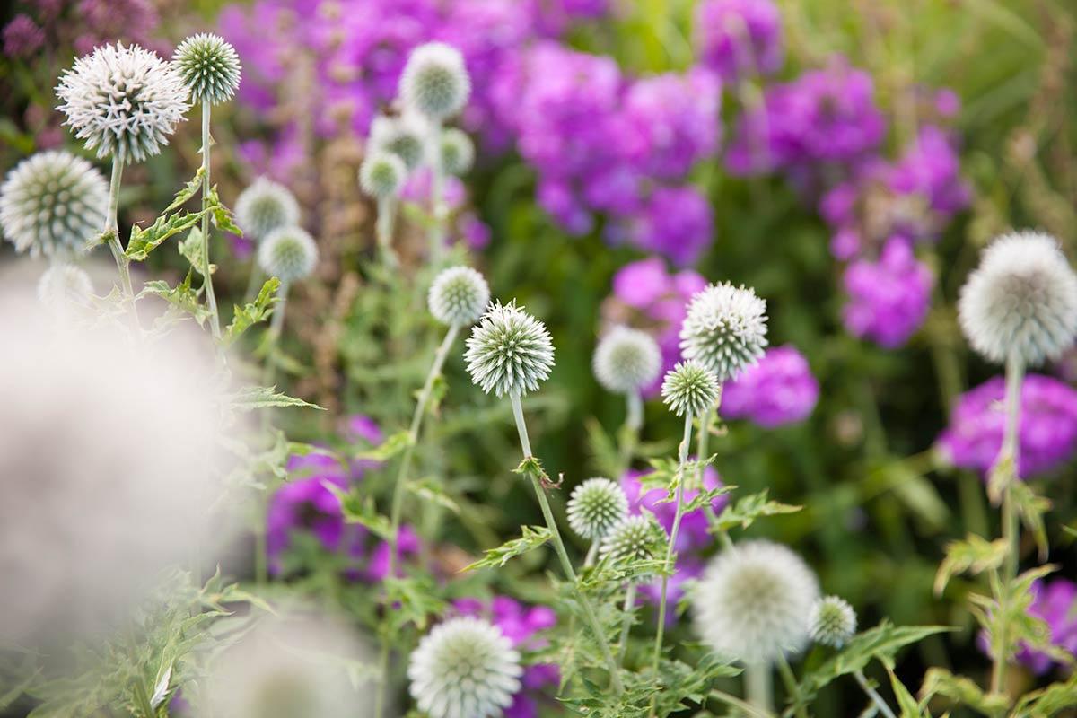 fotografie bloemen tip fotograferen schaduw licht workshop