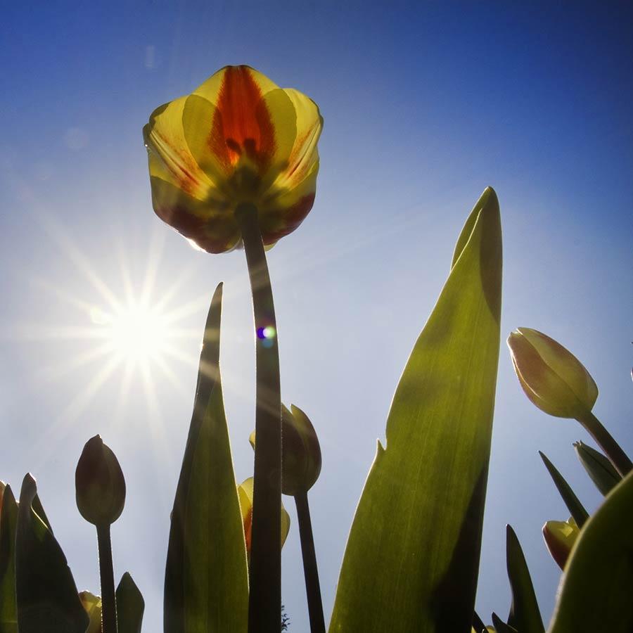 workshop fotografie foto tip tegenlicht zon ster sterretje licht diafragma fotocursus Hoofddorp