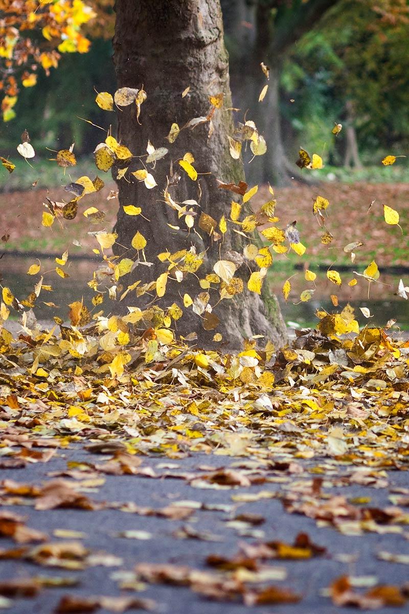 Herfstbladeren fotograferen