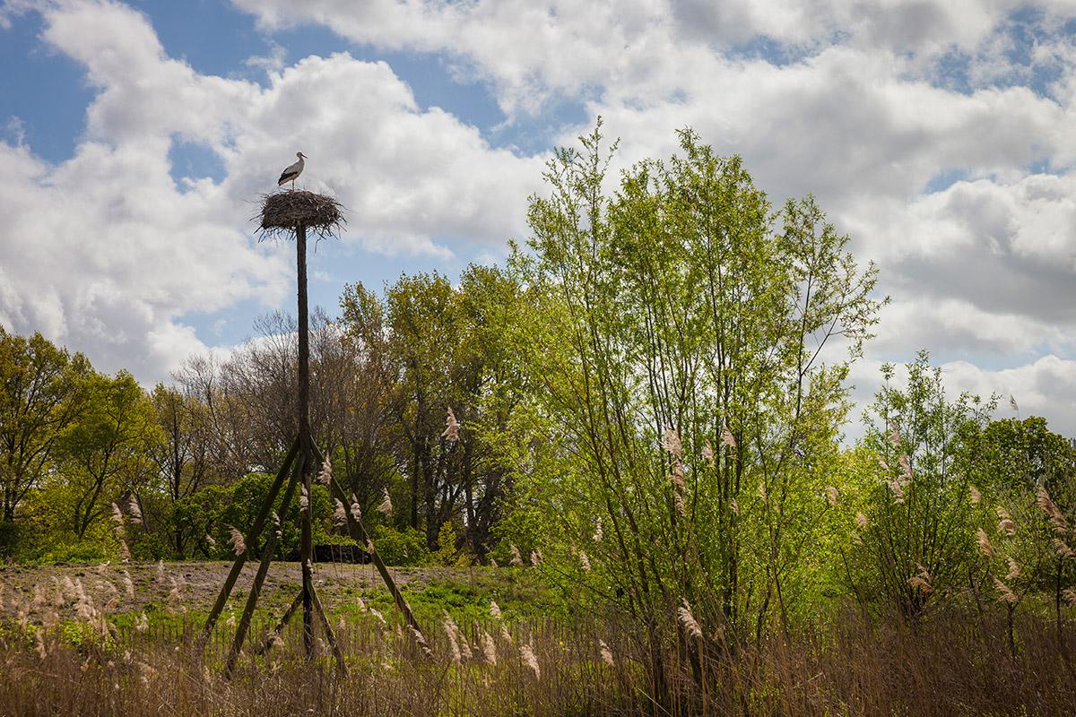 Workshop fotografie Vondelpark Amsterdam