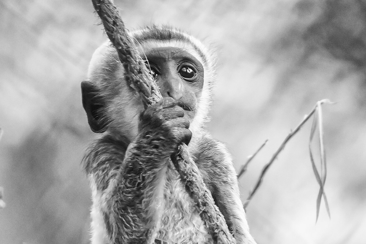 Tip fotografie dierentuin