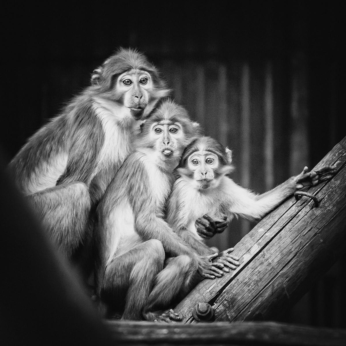 dierentuin foto cursus Rotterdam