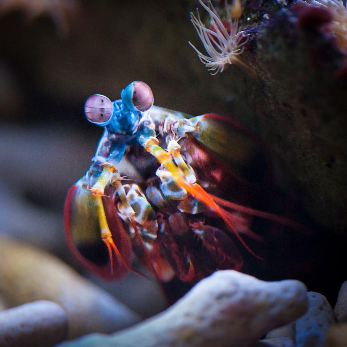 aquarium oceanium foto