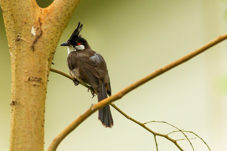 vogel foto Blijdorp