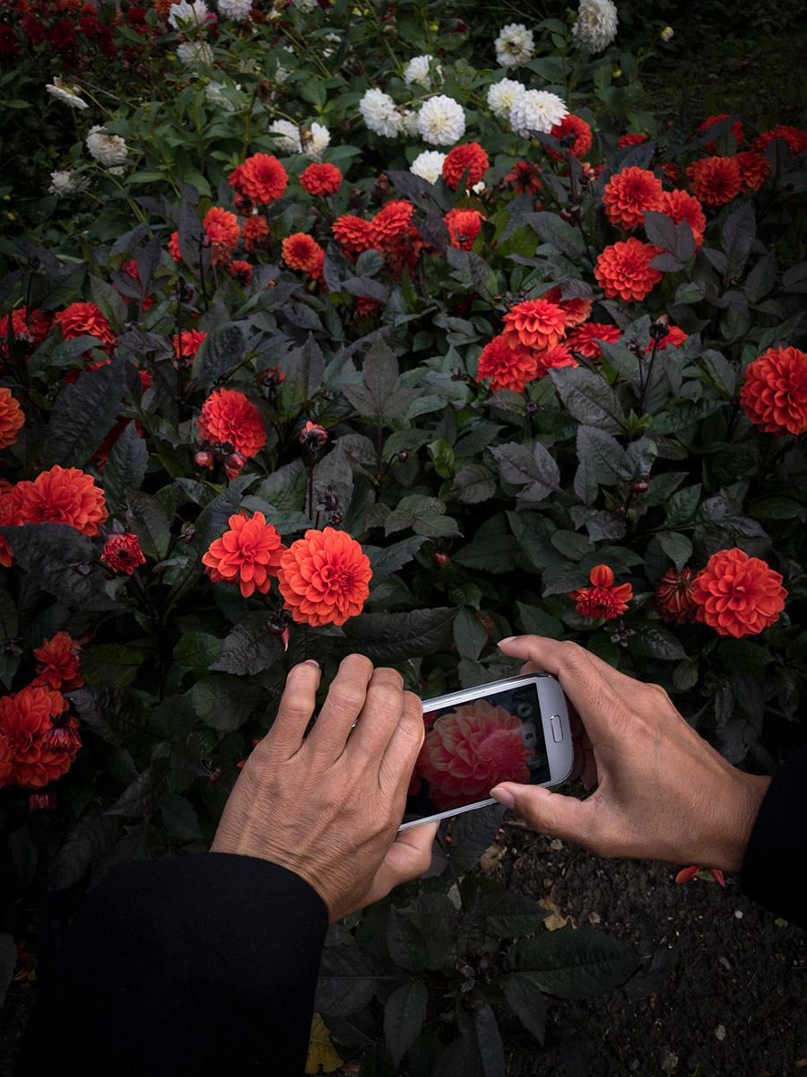smartphone fotografie cursus Hoofddorp