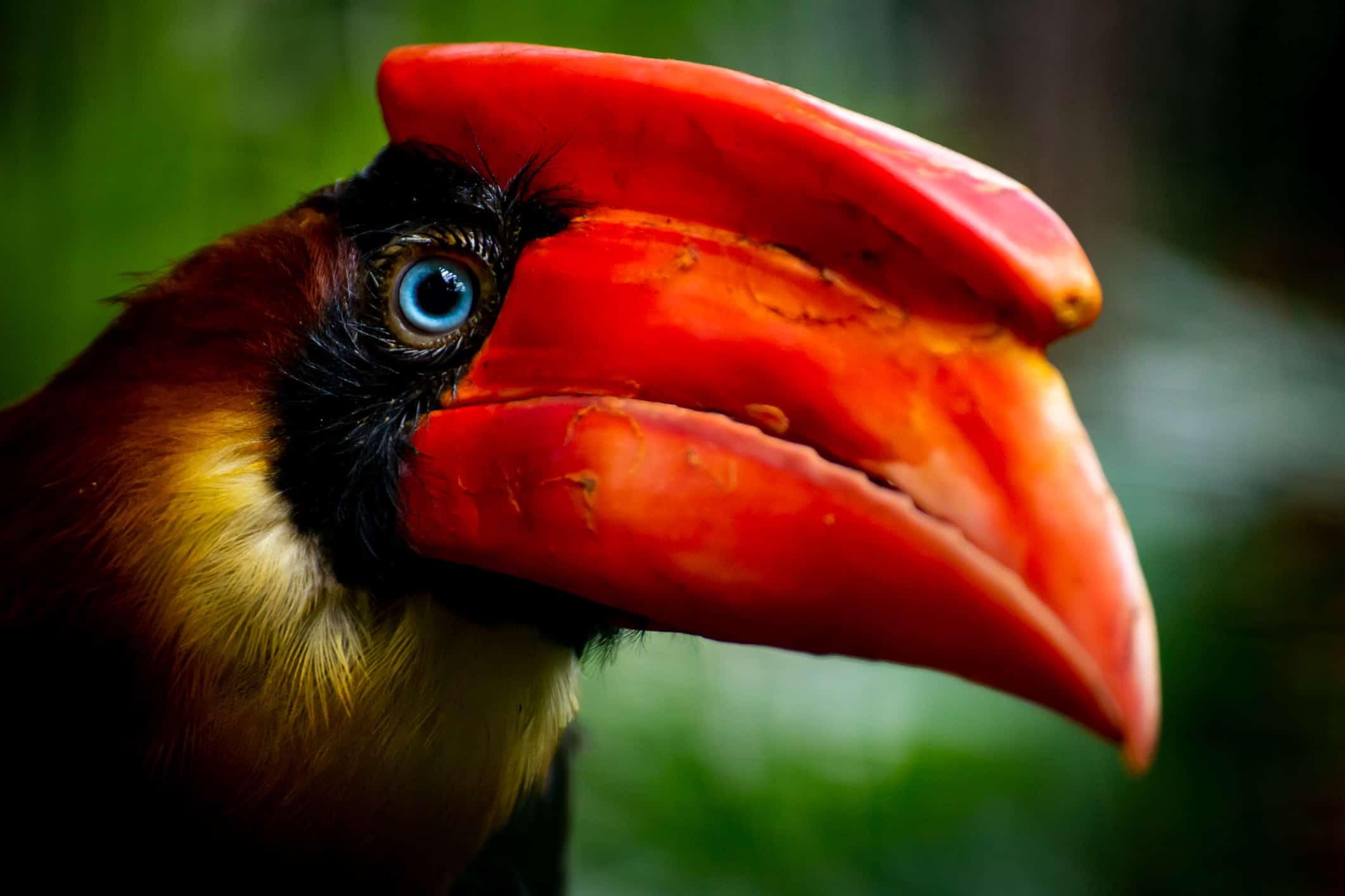 vogels avifauna fotograferen