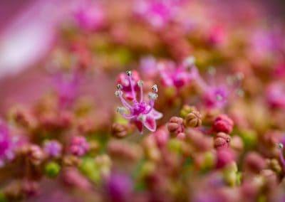 bloemen_avifauna_3