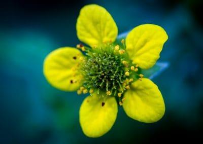 bloemen_avifauna_5
