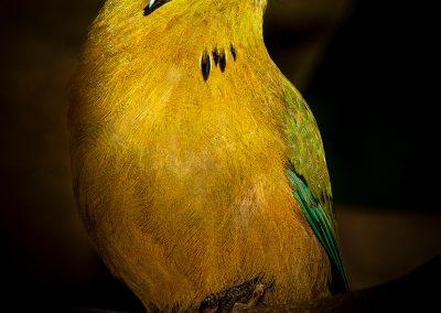 vogel_flitser_11