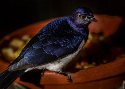 vogel_flitser_4