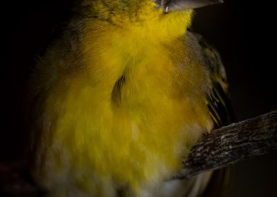 vogel_flitser_8