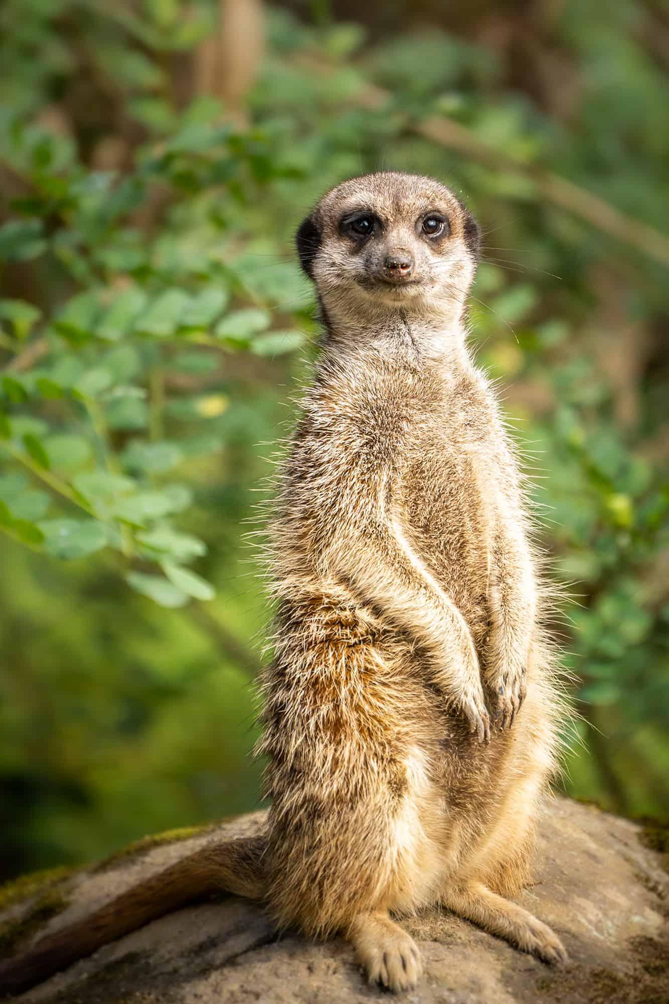 Arnhem fotografiecursus dierentuin
